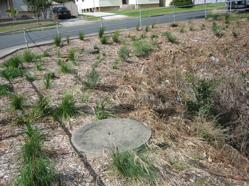 Illawarra community environment groups dig in