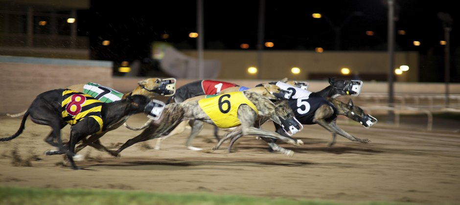 Greyhounds racing toward reform