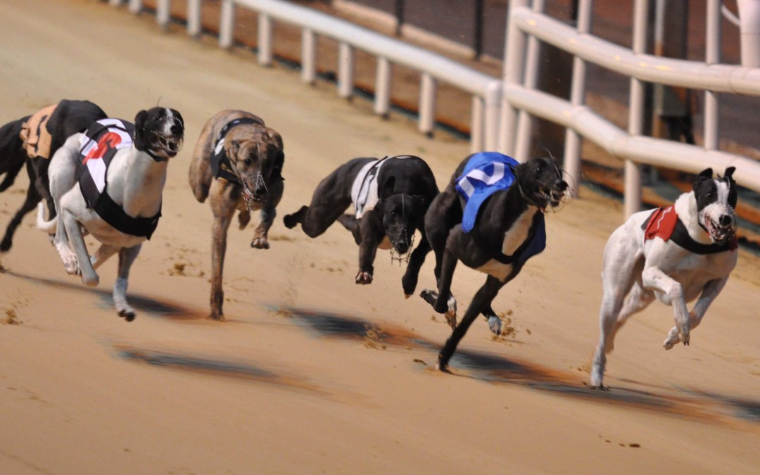 New Government reform set to be positive for greyhound industry