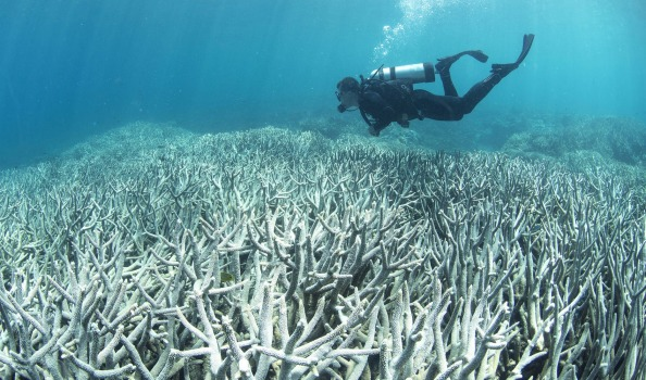 Brightening clouds could save the Great Barrier Reef, scientists say