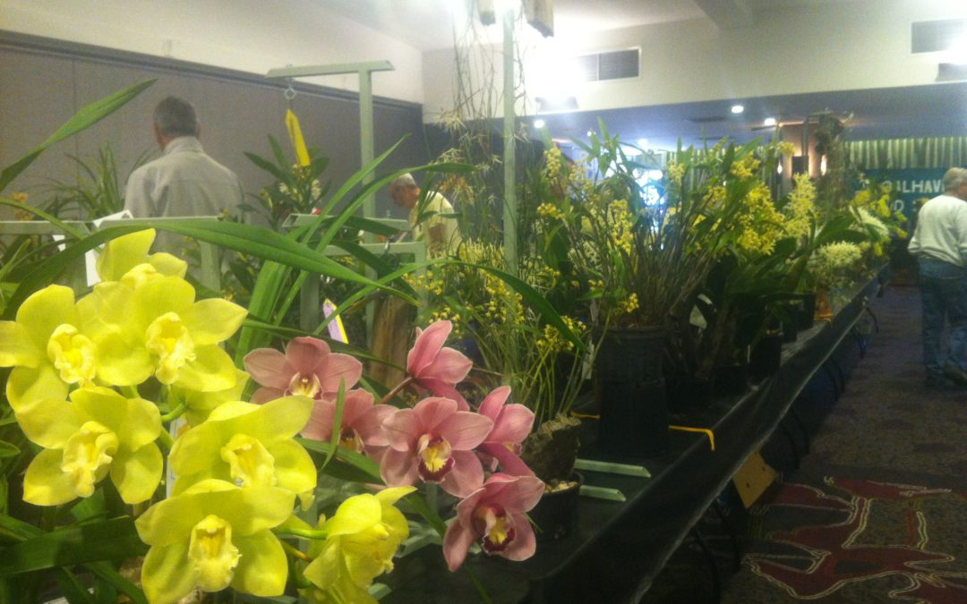 Spring Show educates the Shoalhaven community about endangered orchids