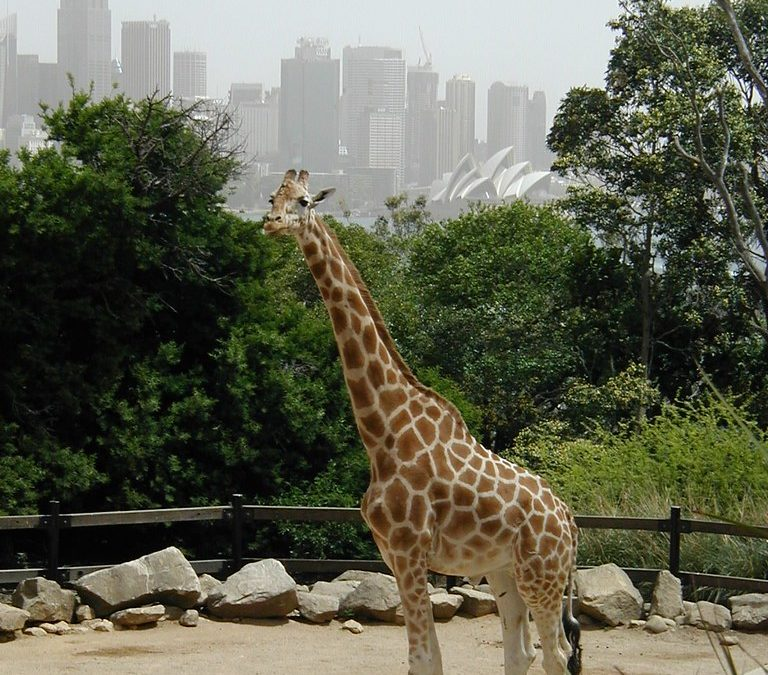 Zoos to receive $95m coronavirus support package from Aust govt
