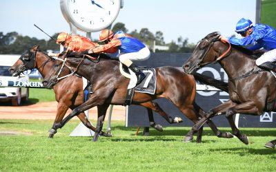 Local Illawarra galloper poised to win $3m race